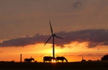 Horses and wind turbine at sunset — Stock Photo