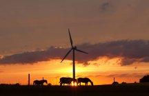 Chevaux et éoliennes au coucher du soleil — Photo de stock