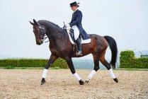 Женский всадника, рыси во время обучения конь выездка конный арене — стоковое фото