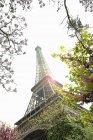 Inquadratura dal basso della Torre Eiffel con alberi in primo piano, Parigi, Francia — Foto stock