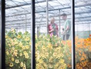 Farm workers in greenhouse abundant with blooming edible flowers — Stock Photo