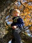Ragazzo che gioca sull'albero, concentrazione selettiva — Foto stock
