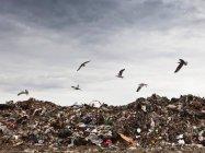 Vögel kreisen im Müllabfuhrzentrum — Stockfoto