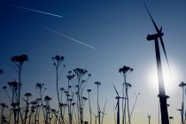 Plants and wind turbines — Stock Photo