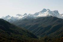 Foreste sulle montagne nevose — Foto stock
