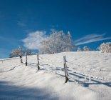 Белый матовый деревья зимой — стоковое фото