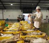 Trabajadores Holding pescado en el mercado - foto de stock