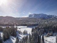Sowcapped горная долина с соснами и кабины журнала — стоковое фото