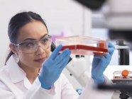 Scientifique examinant des cultures cellulaires poussant dans un bocal de culture en laboratoire — Photo de stock
