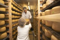 Workers putting cheese round for storage at farm factory — Stock Photo