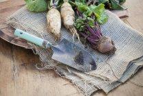 Freshly dug root vegetables — Stock Photo