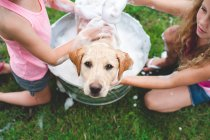 Labrador retriever puppy in bucket looking up while girls washing in soap — Stock Photo