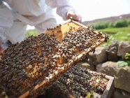 Beekeeper inspects bee hive — Stock Photo