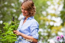 Woman taking care of plants — Stock Photo