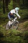 Молодая женщина катается на горном велосипеде в лесу — стоковое фото