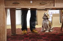 Mans legs and dog looking up in picture framers workshop — Stock Photo