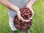 Imagen recortada de Hombre sosteniendo cerezas recién recogidas - foto de stock