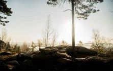 Formação rochosa e árvores recortadas — Fotografia de Stock