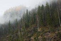 Гори, ліс і туман, село Sarsy, Свердловська область, Росія — стокове фото