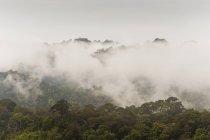 Paysage de jungle, Parc National de Khao Sok, Thaïlande — Photo de stock