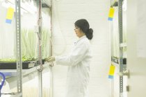 Female scientist choosing plant samples in  greenhouse lab — Stock Photo