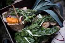 Cajón de manantial recogido verdes y calabaza vegetal en jardín - foto de stock