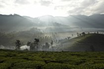 Observing view of Tea plantation at dawn, Kerala, India — Stock Photo