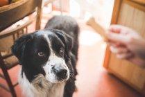 Портрет собаки, пялящейся на владельцев рук и собак — стоковое фото