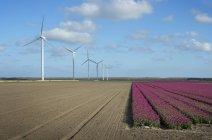 Turbinas eólicas no campo com flores florescentes — Fotografia de Stock