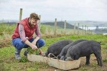 Man on farm feeding piglets — Stock Photo