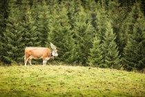 Vue latérale de la vache portant une coiffe dans un champ herbeux — Photo de stock