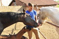 Young man feeding small group of horses and goats in paddock — Stock Photo