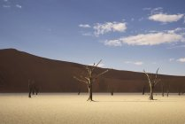 Dead trees on clay pan in bright sunlight, Namibia — Stock Photo