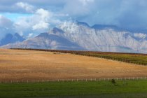 Mountain scenery and vineyard — Stock Photo