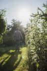 Gardener with wheelbarrow of grass cutting — Stock Photo