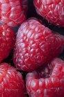 Primer plano de la pila de frambuesas maduras recogidas frescas - foto de stock
