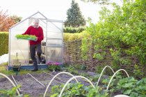 Senior hombre llevar plantas en jardín - foto de stock
