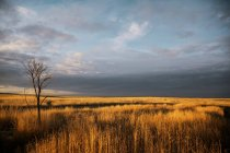 Nubes grises flotando sobre el paisaje - foto de stock