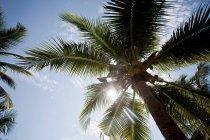 Vista das palmeiras — Fotografia de Stock