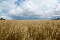 Nuages sur le champ de hautes herbes — Photo de stock
