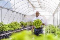 Портрет менеджера на гидропонной ферме в Невисе, Вест-Индия — стоковое фото