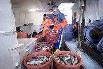 Clasificación de peces sobre el arrastre de los pescadores - foto de stock