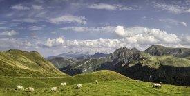 Schafe weiden auf grünen Hügel in Berglandschaft, Pyrenäen, Frankreich — Stockfoto