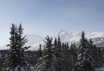 Мальовничий вид на снігу покриті дерев, Denali Національний парк, Аляска — стокове фото