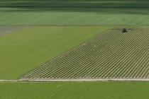 Vista aérea del tractor trabajando en campo verde - foto de stock