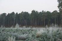 Cena de floresta no inverno — Fotografia de Stock