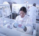Científico haciendo cultivo bacteriano en agar dentro de estación de trabajo de laboratorio - foto de stock