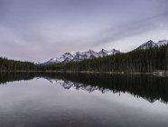 Nevados montañas y pinos que se reflejan en el agua del lago - foto de stock