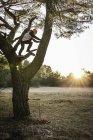 Femme escalade arbre, Augsbourg, Bavière, Allemagne — Photo de stock