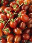 Зменшеному вигляді червоний стиглих помідорів смачні — стокове фото